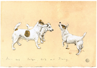 Dog Portraits - Badger, Bob & Jimmy - Jack Russell