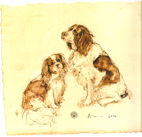 Dog Portraits - Jessica- King Charles Spaniel and Springer